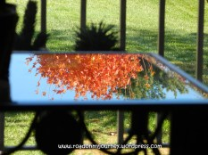 glass coffee table reflecting orange leaves and blue sky