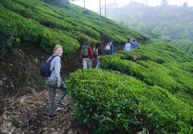 Munnar Teeplantagen Tour