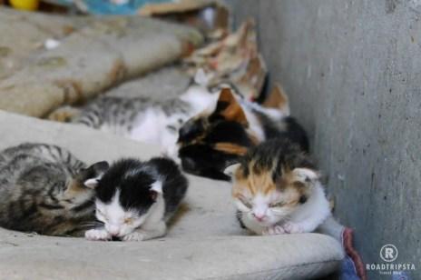 Zadar Katzenbabys