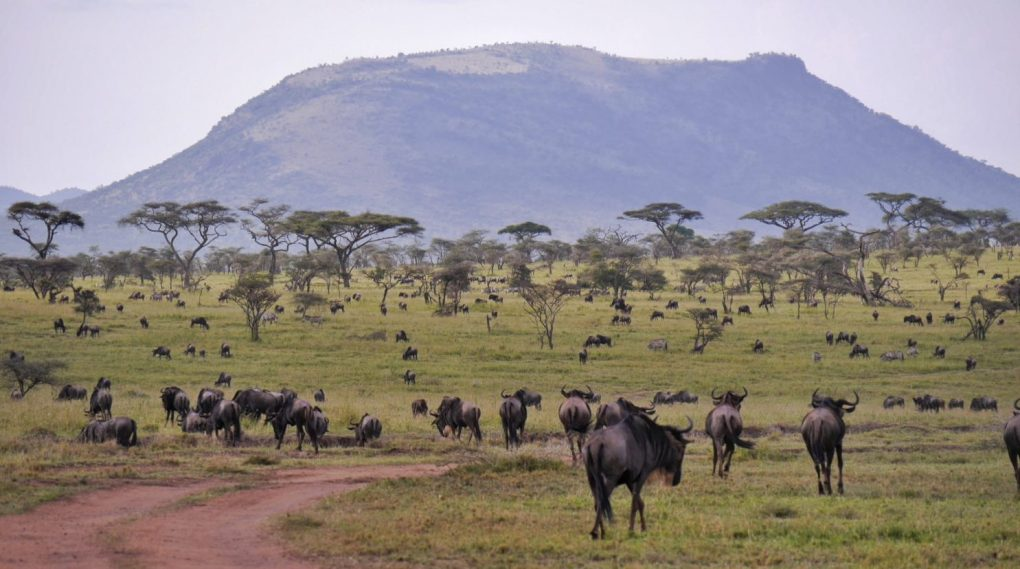 Serengeti Selbstfahrer-Safari