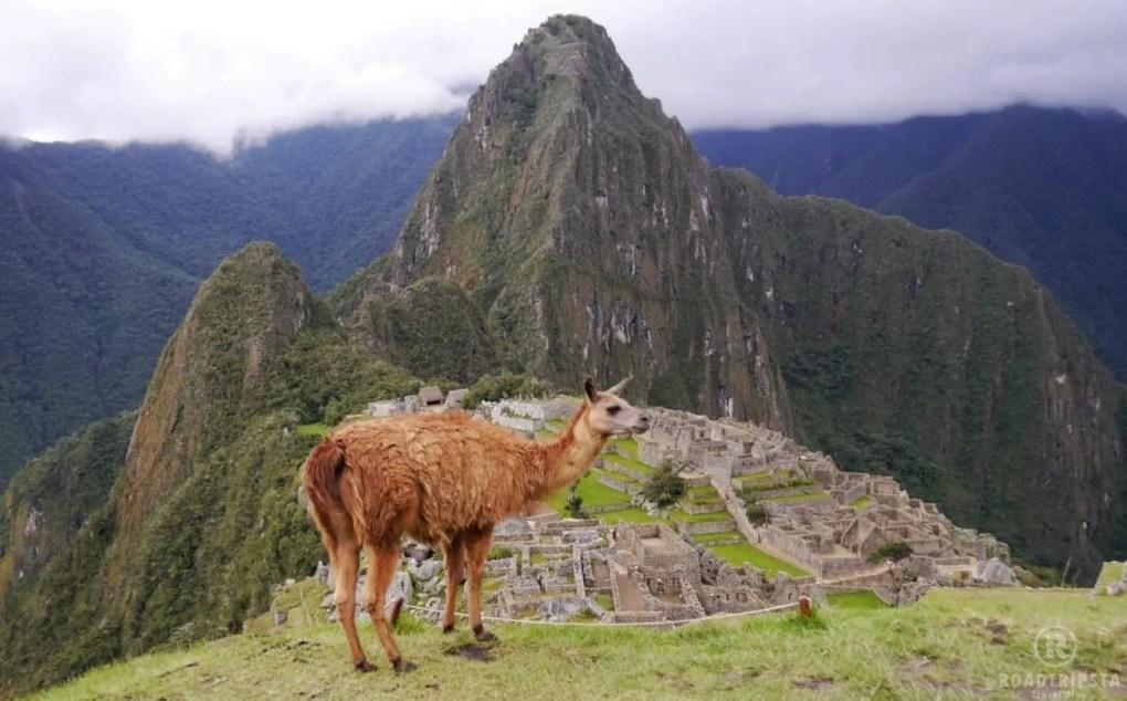 Machu Picchu mit Alpaka
