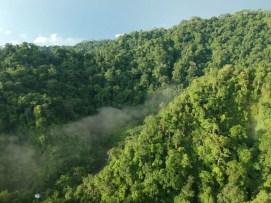 Regenwald Corcovado