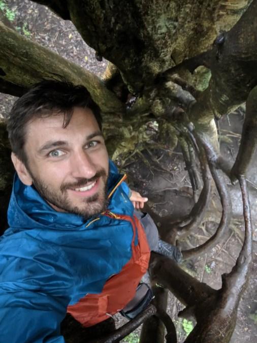 Ficus Tree in Monteverde
