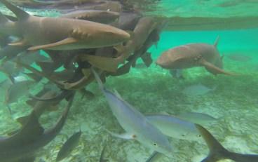 Shark Ray Alley, Caye Caulker, Belize