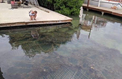 Seepferdchen auf Caye Caulker