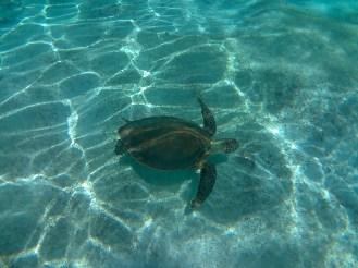 Wasserschildkröte Providencia, Schnorcheln