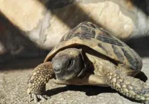 Paklenica Nationalpark Schildkröten
