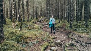 Wanderung durch den Nadelwald