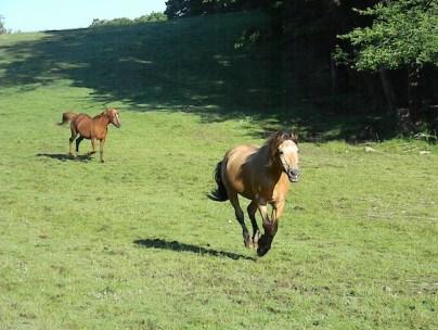 Bill the Horse