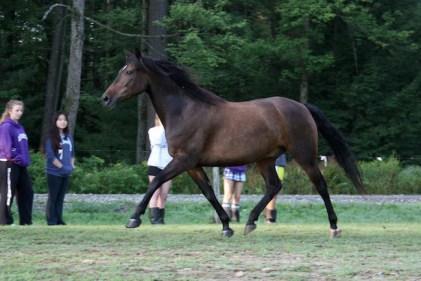 Caliber the Horse