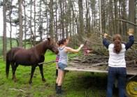 Dante the Horse