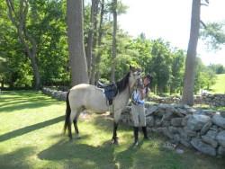 Doyle the Horse