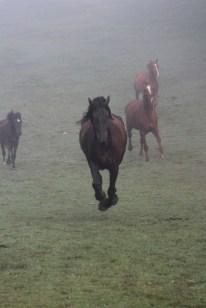 Elliot the Horse