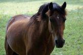Essie the Horse