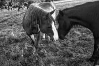 Montana the Horse