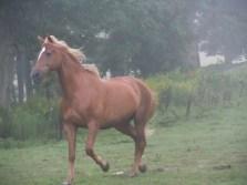 Quint the Horse