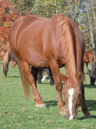 Wanda the Horse