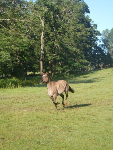 Yuma the Horse