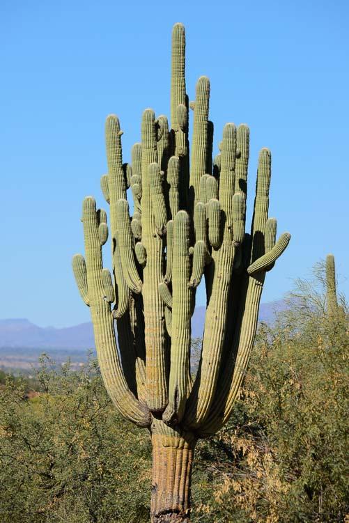Quick Pic  Arizona Desert Love