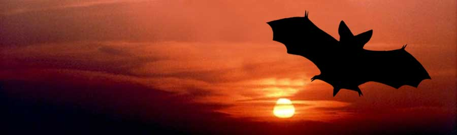 silhouette of a bat at sunset