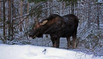 Winter wildlife in Algonquin Provincial Park