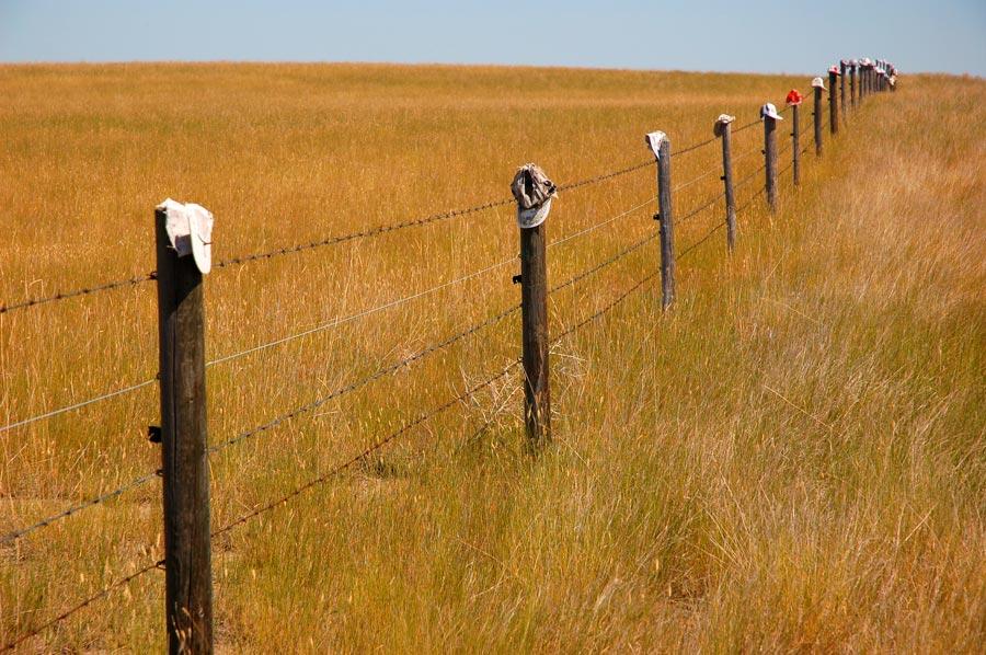 ballcaps-fence-Empress_MedicineHat_04