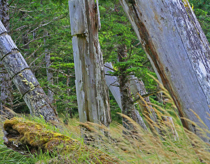 decaying Haida Gwaii totems at skedans