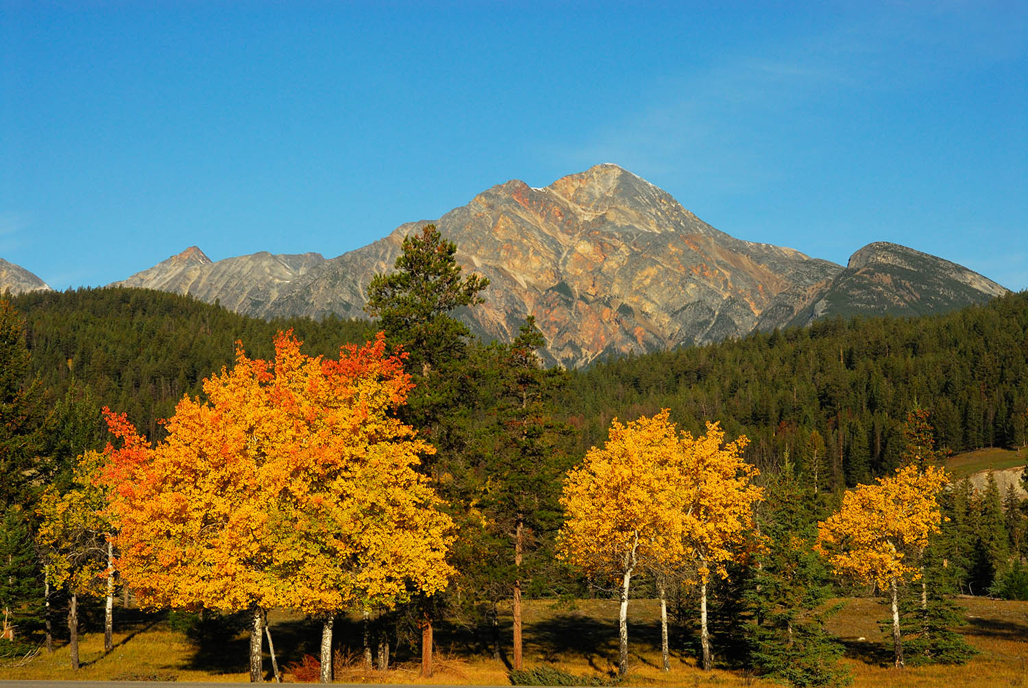 Pyramid Mountain and fall colours, Jasper Natiional Park