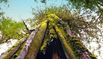 Port Renfrew – Tall Tree Capital of Canada