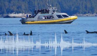 Acoustical Monitoring for Whale Watching