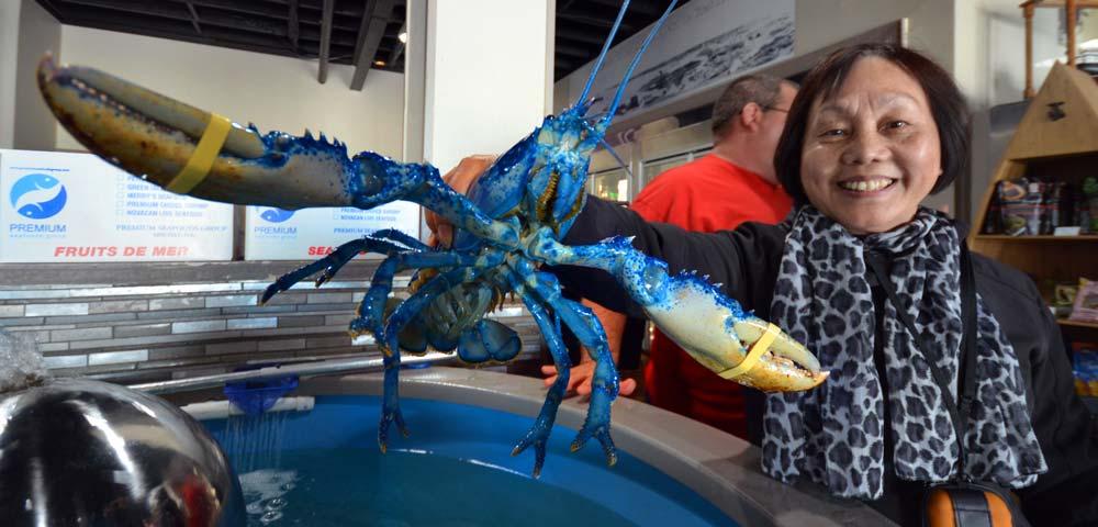 Cape Breton fishing Premium Seafoods