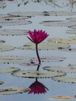In the lake surrounding Neak Pean