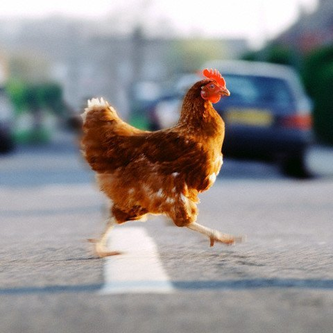 Assessing Celebrities by their likely  answers to 'Why Did the Chicken Cross the Road?'