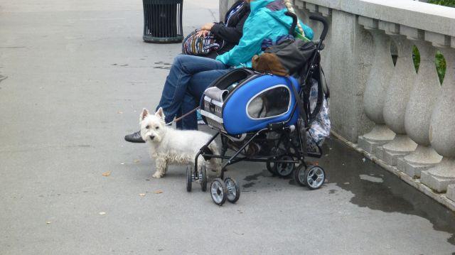 Une poussette pour chien à Ljubljana