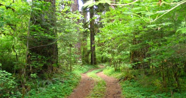 Aufderheide Scenic Drive, Oregon