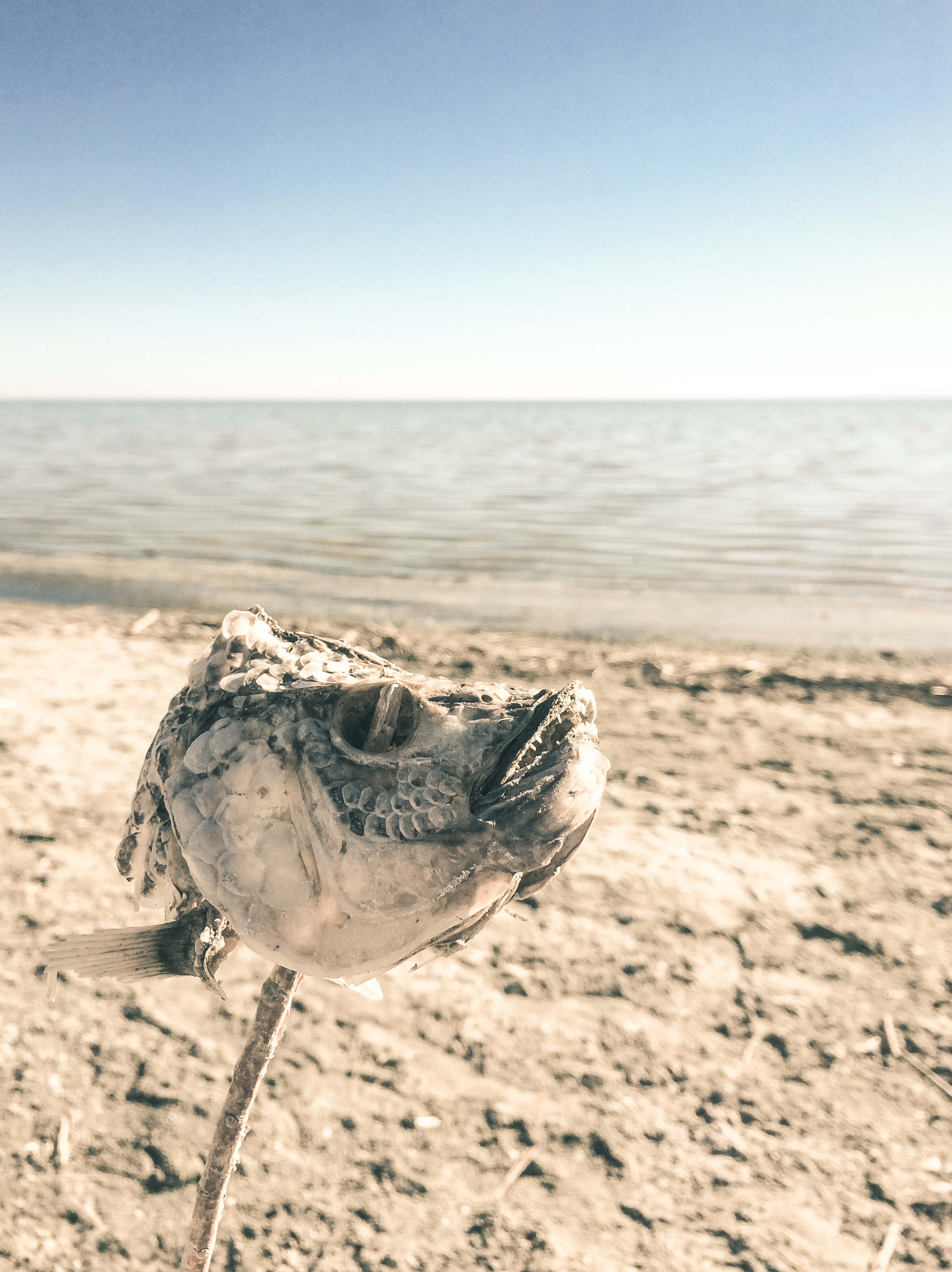 Salton Sea Road Trip 4 Things you Absolutely Undoubtedly