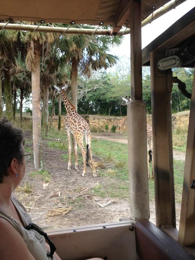 Disney Princess Half Marathon Safari at Animal Kingdom