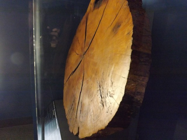 Cross Section of Tree From Abraham Lincoln Birthplace National Historical Site