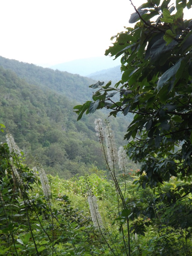 Shenandoah National Park: Hiking to Lewis Falls