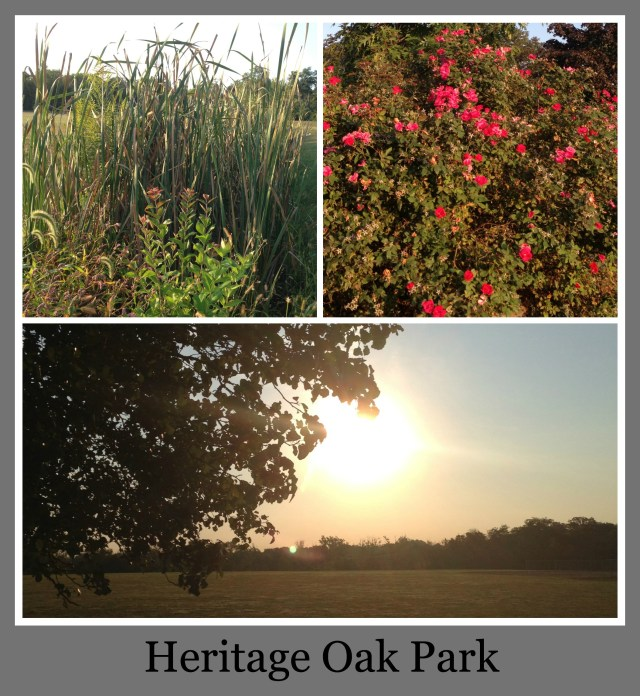 30 Days of Trails in Cincinnati: Heritage Oak Park