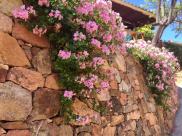 Flowers Girolata