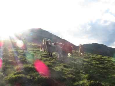 Wild horses & sunset
