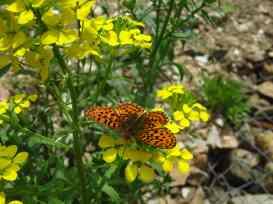 Butterfly in Runc Gorge (2)