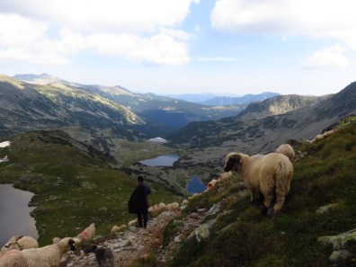 Sheep with a view (Taul Portii and more)