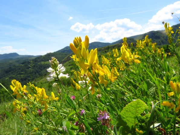 Flowers in the hills above Runc