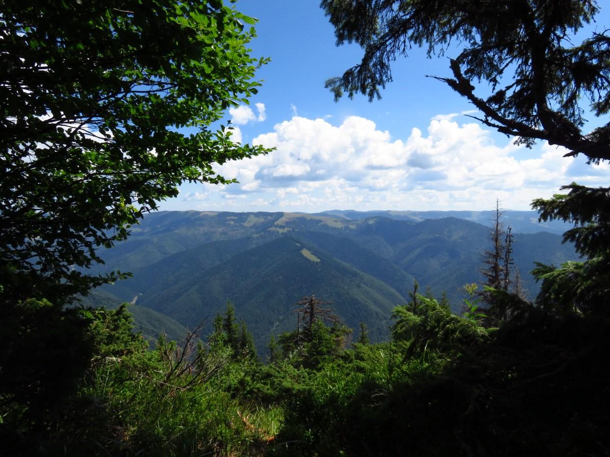 The Munții Maramureșului, on the way to Poienile de sub Munte