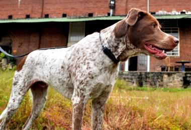 atlanta-dog-park