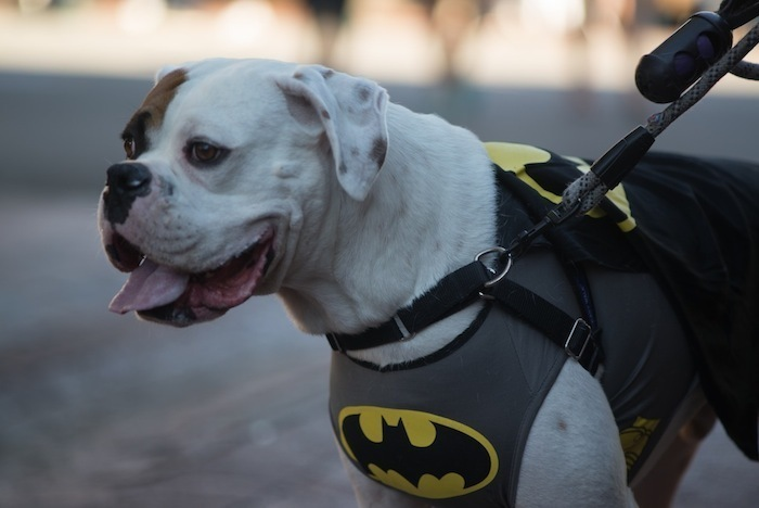 Best dog halloween costumes [for big dogs or little dogs