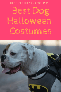 Best dog halloween costumes - RoamiliciousBest dog ...