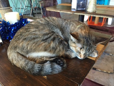 2016-09-21-17-blue-cat-cafe-04